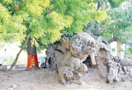 ராமநாதபுரம் பெரியார் நகர்  முனீஸ்வரர் கோயிலில் உள்ள பொந்தன்புளி மரத்தில் உள்ள பொந்து.