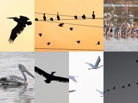 birds-in-the-pallikarani-near-velachery