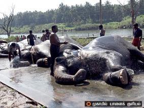 elephant-cruelty