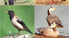 birds-without-a-passport