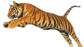 article-on-tigers-preservation