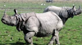 rhino-in-vandaloor-zoo