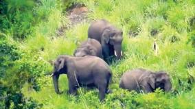 elephants-shifting-to-madurai-forests