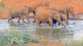 elephants-returns-to-forest