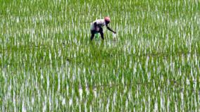 delta-district-paddy-cultivation