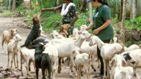 kerala-floods-when-dogs-turned-guardian-angels