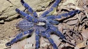 rare-species-of-spider-found