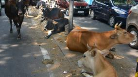 hostel-for-cows