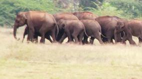 elephant-migration