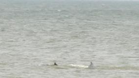dolphins-in-mahabalipuram