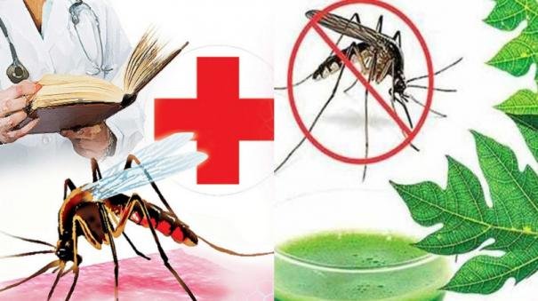 monsoon-transmitted-dengue-what-are-preventive-measures