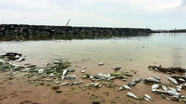 fishes-dead-in-pamban-sea