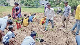 small-forests-in-puduchery