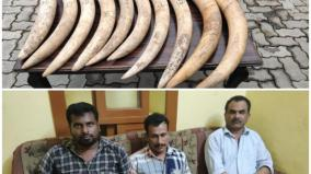 karnataka-3-held-for-poaching-elephants-for-tusks