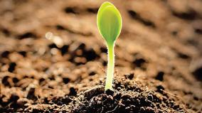 soil-fertility
