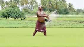 samba-cultivation-in-delta