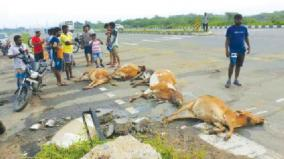 12-cows-died-in-accident