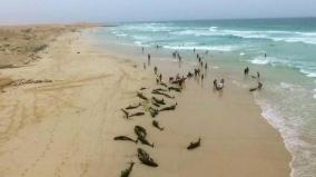 more-than-100-dolphins-found-dead-on-island-beach-off-west-africa