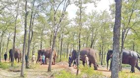 elephants-rehabilitation