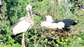 bird-immigration