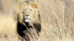 342-kilos-of-lion-bones-seized-at-johannesburg-airport
