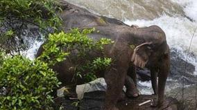 six-wild-elephants-drown-after-slipping-off-waterfall-in-thai-park