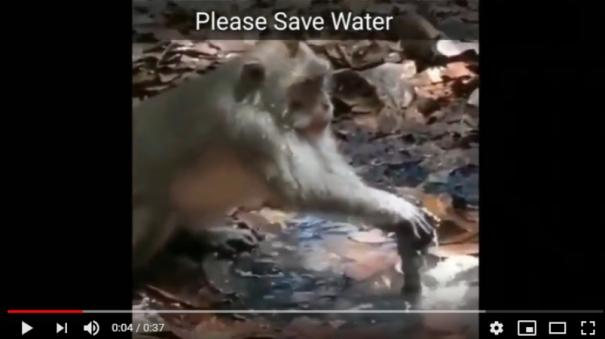 monkey-saves-water