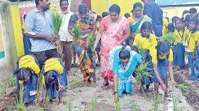 samba-cultivation-planting-work
