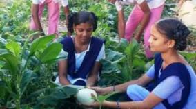vegetable-garden-in-schools