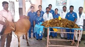 52-kg-plastic-in-cow-stomach