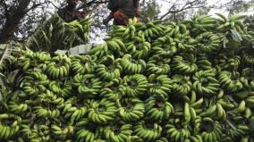 store-license-revoked-if-bananas-are-ripe-with-chemicals