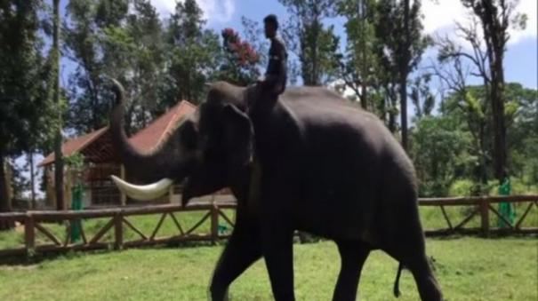 voter-came-in-elephant
