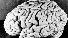 discoveries-of-human-brain