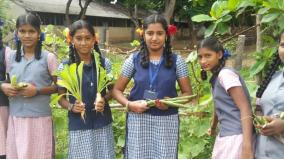 students-doing-vegetable-cultivation