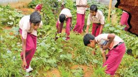 vegetable-in-garden-in-school