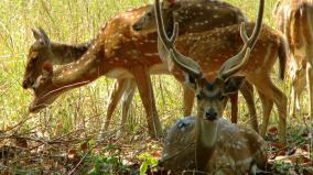 497-deer-deaths-in-chennai-in-5-years-shock-report-submitted-forest-dept-at-high-court