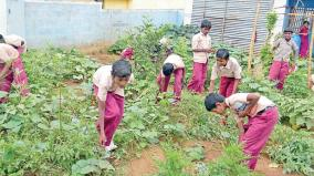 vegetable-farm-by-students