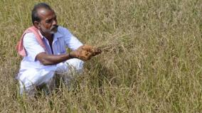 crop-insurance-dispute-in-sivagangai-district