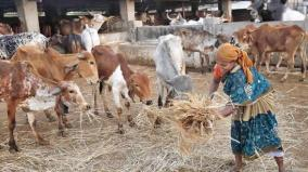 cow-shelter-built-on-land-given-by-muslim-youth