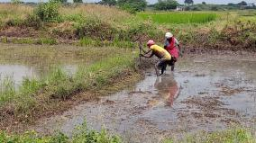 virudhunagar-continuous-rains-helps-farmers-initiate-agrarian-process