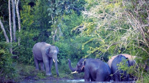 elephants-herd-in-krishnagiri