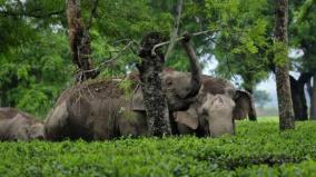 elephant-issue