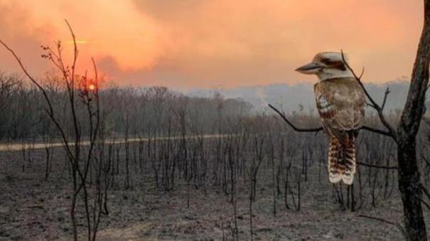 australian-bushfires-may-continue-for-weeks