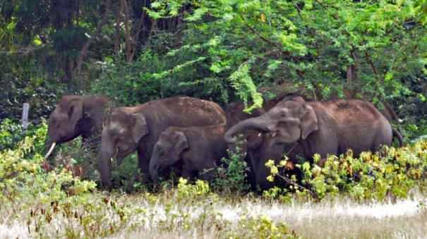 miraculous-escape-for-elephants-as-transformer-explodes