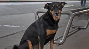 at-chennai-park-railway-station-beware-of-the-dog