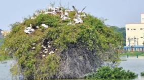 birds-in-vedanthangal