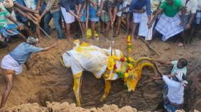 temple-bull-in-ramanathapuram-village-buried-with-full-honour
