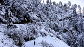 himachal-pradesh-trees-covered-in-snow-at-sangla-valley-in-kinnaur-district