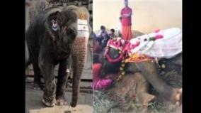 sankameshwara-temple-elephant-vedanaikai-dies