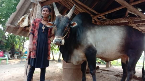 meet-madurai-s-young-lady-kanimozhi-she-trains-her-bull-for-this-jallikattu